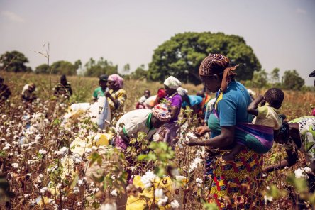 Comment le coton OGM de Monsanto s'est transformé en fléau pour les paysans du Burkina Faso dans AGRICULTURE the_cotton_connection_-_wouter_elsen_-_7-c1cf9